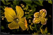 2 Yellow flowers